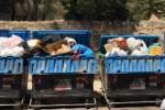 Rifiuti, cassonetti stracolmi e immondizia per strada a Palermo
