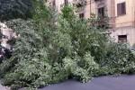 Paura a Palermo, cade un albero in via Goethe: danni alle auto ma nessun ferito - Video