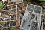 Sorpreso con gabbie e trappole per cardellini, denunciato a Catania