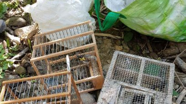 vendita illegale cardellini, Catania, Cronaca