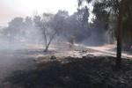 """Colture distrutte dai roghi: """"In Sicilia 5 anni per ricostruire"""""""