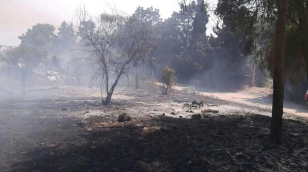 allarme siccità, coldiretti, emergenza incendi sicilia, Sicilia, Economia