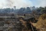 Ancora incendi in Sicilia, danni ad una parte di una riserva nel Catanese