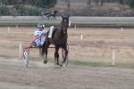 I cavalli tornano a correre, riapre l'ippodromo di Palermo - Video