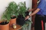 Coltivava marijuana a casa, arrestato un giovane a Canicattì
