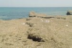 """Spiagge di Marzamemi invase dalle alghe, il comitato protesta: """"Turisti in fuga"""""""