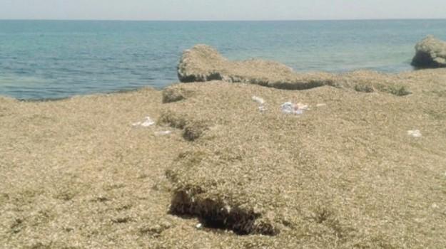 Alghe a Marzamemi, Siracusa, Cronaca