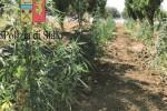 Marijuana coltivata a Centuripe, 3 arresti