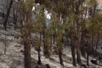 Domate le fiamme alla riserva dello Zingaro, si contano i danni: zona sud in cenere