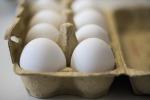 Uova contaminate, a Milano sequestrate omelette surgelate