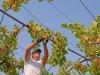 Federdoc, sbloccare con urgenza fondi Ocm vino promozione