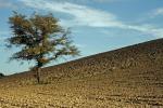 Alimentare: Barilla lancia concorso per 'salvare pianeta'