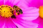 Anche le api comprendono il concetto di zero (fonte: Danny Perez Photography)
