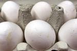 Uova contaminate: Zooprofilattico Abruzzo eseguirà analisi