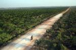 Unione olio palma sostenibile, 'Bollino blu' é arbitrario