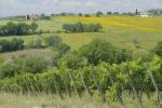 Cecchini, Regione Umbria ha erogato 8,2 milioni di euro di contributi