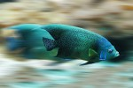 Con il riscaldamento globale pesci più piccoli anche del 30%