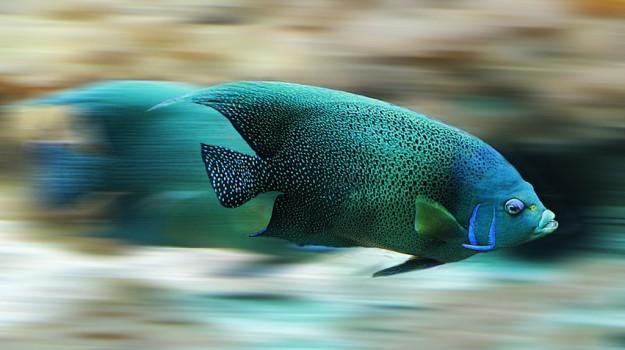 pesci, riscaldamento globale, Sicilia, Società