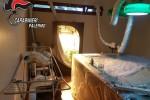 Serra di marijuana in una villa a Palermo: l'impianto nella sala biliardo - Foto