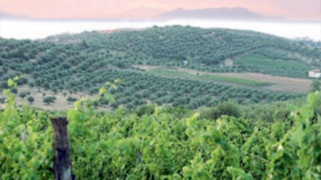 antico vitigno a furnari, azienda cambria, Messina, Economia