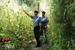 Piante di marijuana per 200 chili di droga, sequestro a Vittoria