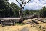 Castagno dei Cento Cavalli, il sogno infranto dell'area per i turisti - Foto