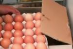Uova contaminate: positivo il test su campione Civitanova Marche