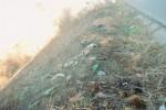 La pineta di Calamona devastata da un rogo, ritrovata la dignità grazie ai volontari