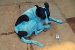 """Cani """"azzurri"""" a Mumbai dopo il bagno in un fiume inquinato"""