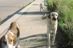 Fontanelle, il Comune toglie i cani randagi dalla strada ma i cittadini li rivogliono