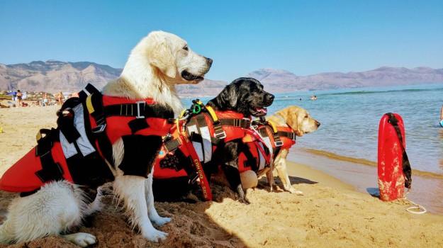 salvataggio bambina cani bagnino alcamo, Trapani, Cronaca