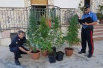 Serra di cannabis a Carini: un impianto di ventilazione allontanava l'odore