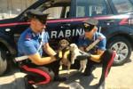 Abbandonano cuccioli ma le telecamere li inquadrano: denunciati due palermitani