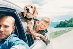 Viaggiare con il cane, tutto quello che c'è da sapere