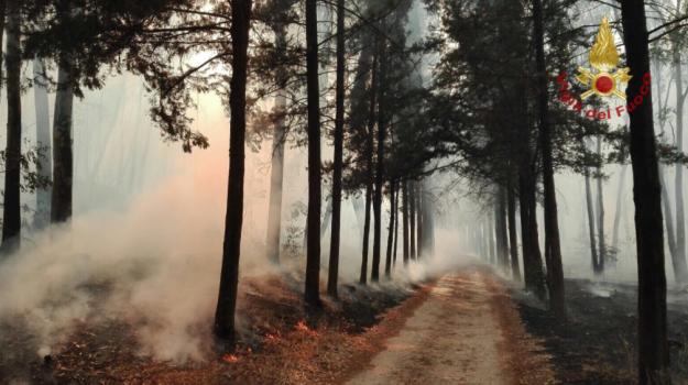 incendi piazza armerina, Enna, Cronaca