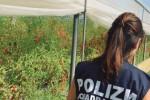 A Licata un agricoltore freddato con 5 colpi di pistola, fermato un parente 19enne