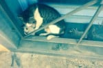"""Partorisce in una chiesa di Villabate: """"sotto sfratto"""" una mamma gatta, si cerca una famiglia"""