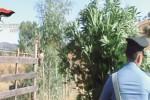 Coltiva piante di marijuana, un arresto a Nicosia