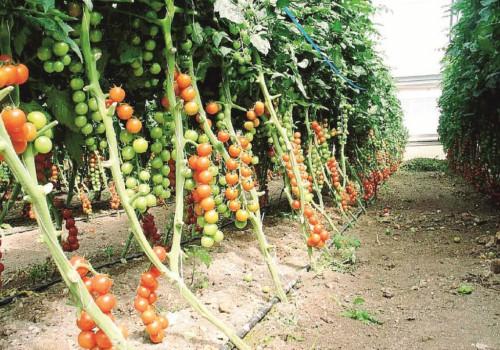 agricoltura ragusa, Ragusa, Economia