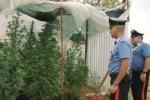 Coltivavano marijuana a San Cataldo, due fratelli ritenuti colpevoli