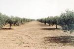 Emergenza siccità nel Vallone, la Regione prevede aiuti per gli agricoltori