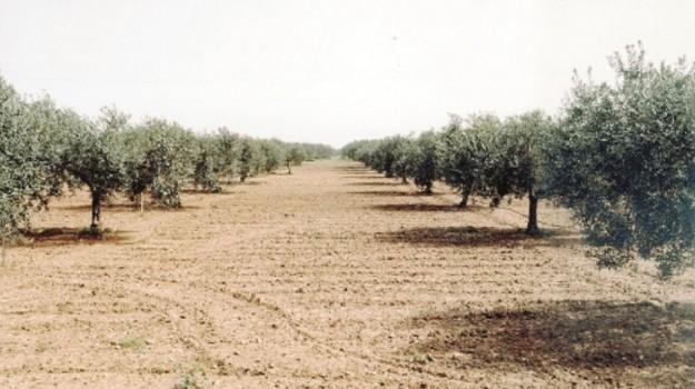 siccità, Caltanissetta, Economia