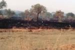 Bruciati 400 ulivi in un bene confiscato a Castelvetrano