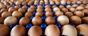 Uova contaminate, due nuovi casi scoperti dai Nas: oltre 90mila sequestri