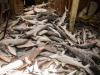 Pesca: Camera, nuove ripartizioni per tonno rosso