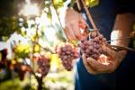 Storie dei vini e di chi li produce