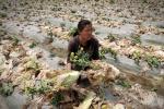 Onu, degradato un terzo dei terreni al mondo