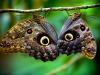 Le ali di farfalla capolavoro di un gene pittore