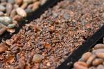 La domanda di cioccolato sta distruggendo i parchi africani