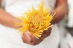 Aidepi e Italmopa, analisi Ministero della Salute dicono che grano estero è sicuro